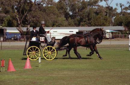 Adelaide International Horse Trials (main pic - National Carriage Driving Champs)